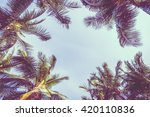 Vintage Coconut Palm Tree On...