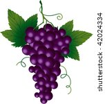 bunch of grapes | Shutterstock .eps vector #42024334