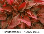 Background Of Red Leaves With...
