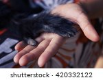 human hand and black spider... | Shutterstock . vector #420332122