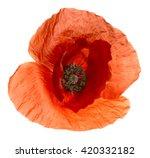 Translucent Macro Poppy Flower...