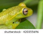 perereca   Shutterstock . vector #420355696