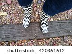 chevron patterned rain boots | Shutterstock . vector #420361612