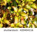 beautiful as flowers  | Shutterstock . vector #420404116