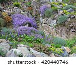 Rock Garden With Various Flowers