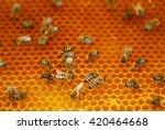 bees | Shutterstock . vector #420464668