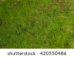 Moss  On Wood  Green Moss On...