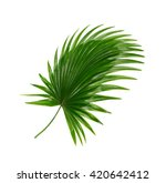 Green Leaf Of Palm Tree...