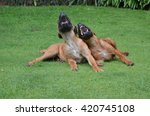 two laughing dogs   Shutterstock . vector #420745108