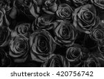 Stock photo natura roses background greeting card with a luxury roses 420756742