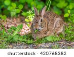 grey rabbit looking at you on... | Shutterstock . vector #420768382