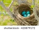 Four Robin's Eggs In A Nest...