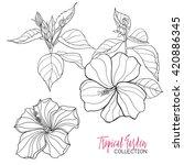 Hibiscus. Vector Illustration.