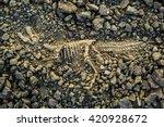 Dig Bones Fossils T Rex Dinosaur