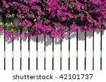 White Picket Fence With Purple...