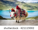 decorated white tibetan yak at... | Shutterstock . vector #421115002