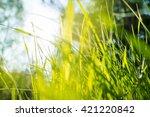 grass background   Shutterstock . vector #421220842
