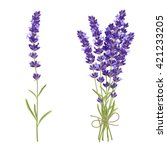 fresh cut fragrant lavender... | Shutterstock .eps vector #421233205