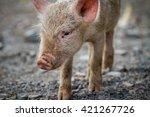 lucky happy pig | Shutterstock . vector #421267726