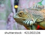 Portrait Of Green Iguana...