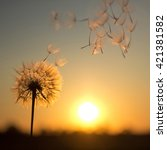 dandelion against the backdrop... | Shutterstock . vector #421381582