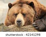 Alaskan Brown  Grizzly  Bear