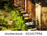 Hives In An Apiary With Bees...