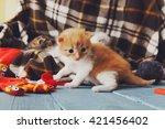 Stock photo kitten and mittens red orange newborn kitten near a plaid blanket sweet adorable tiny kitten on a 421456402