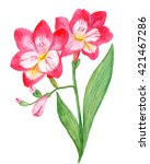 pink watercolor flower at white ...   Shutterstock . vector #421467286