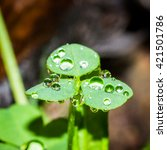A Clover Covered With The...