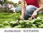 summer work in the garden | Shutterstock . vector #421516456