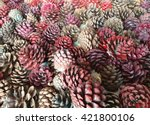The Pine Cone Background