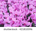 pink orchid background | Shutterstock . vector #421810396