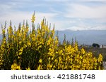 Gorse Flower And Blue Sky With...