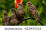 Group Of Birds Watching. Young...
