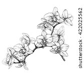 hand drawn orchid branch. black ... | Shutterstock .eps vector #422025562