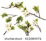 Stock photo set branch apple plum pear tree blooming isolated on white background top view of a flat lying 422084476