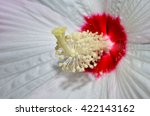 Tropical Hibiscus Flower. ...