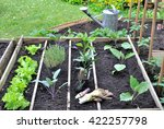 Plantation Of Seedlings In A...