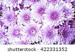 purple flowers. group of mums... | Shutterstock . vector #422331352