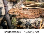macro shot of a lizard. early... | Shutterstock . vector #422348725