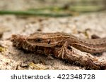 macro shot of a lizard. early... | Shutterstock . vector #422348728
