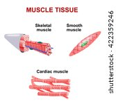 types of muscle tissue. | Shutterstock .eps vector #422359246