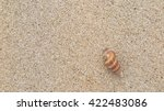 Fossil Shell On The Sand Beach