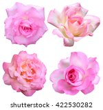 pink rose isolated | Shutterstock . vector #422530282
