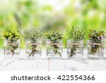 bottle with herbs on white... | Shutterstock . vector #422554366