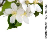 apple flowers on a white... | Shutterstock . vector #422788732