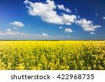 Rapeseed Field  Brassica Napus