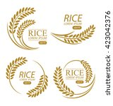 rice. vector illustration. | Shutterstock .eps vector #423042376