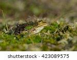 frog green | Shutterstock . vector #423089575